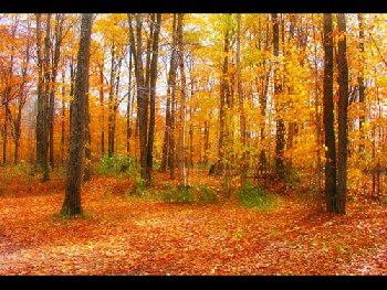 ramos_fall6